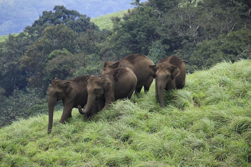 Miglior periodo per un viaggio in Kerala | Elefanti a Periyar